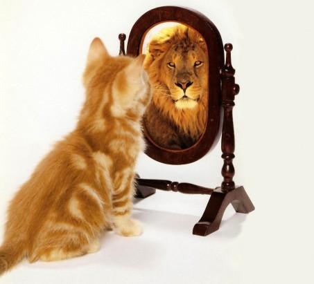 gato leon 2