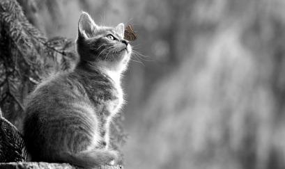 cat-2810383_640