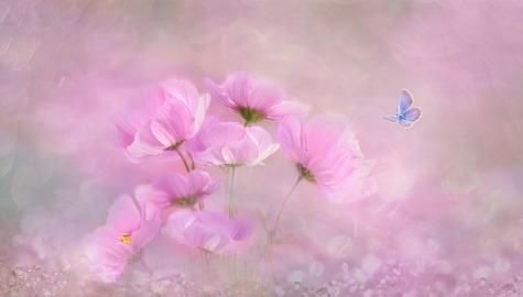 flower-3054734_640