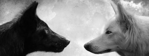 dois-lobos-696x264