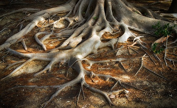 roots-of-the-tree-3779986_640